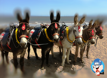 the_donkey_jockey_1